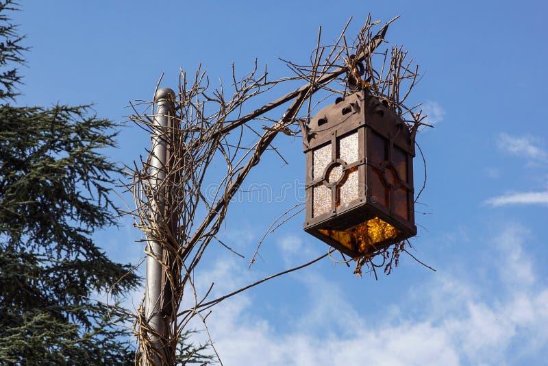 古色古香的冷淡的路灯柱和美好的积雪的分支反对天蓝色的天空 免版税图库摄影