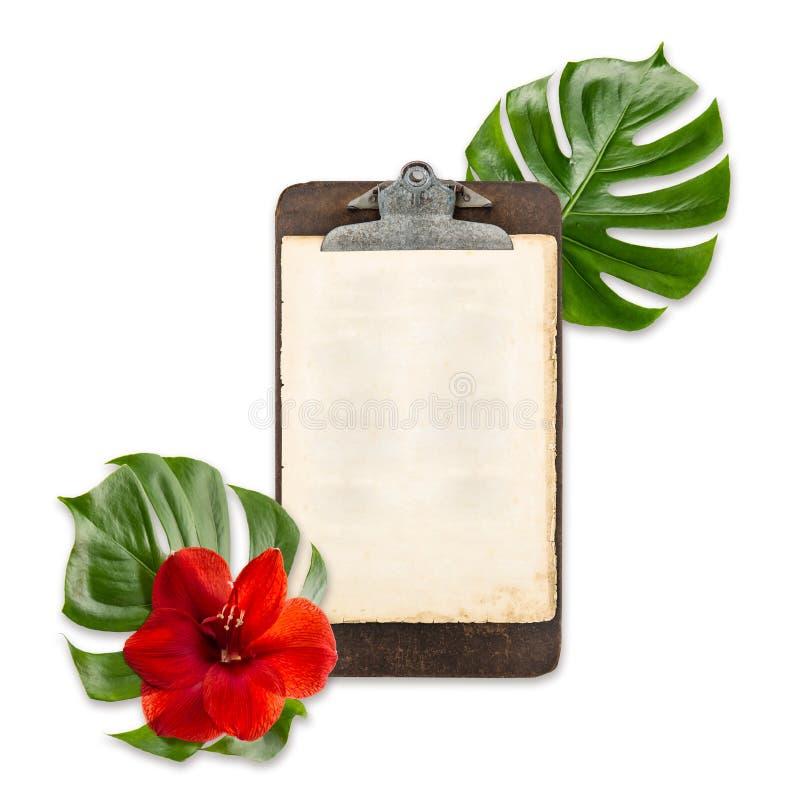 古色古香的剪贴板纸绿色monstera留下白色背景 免版税库存照片
