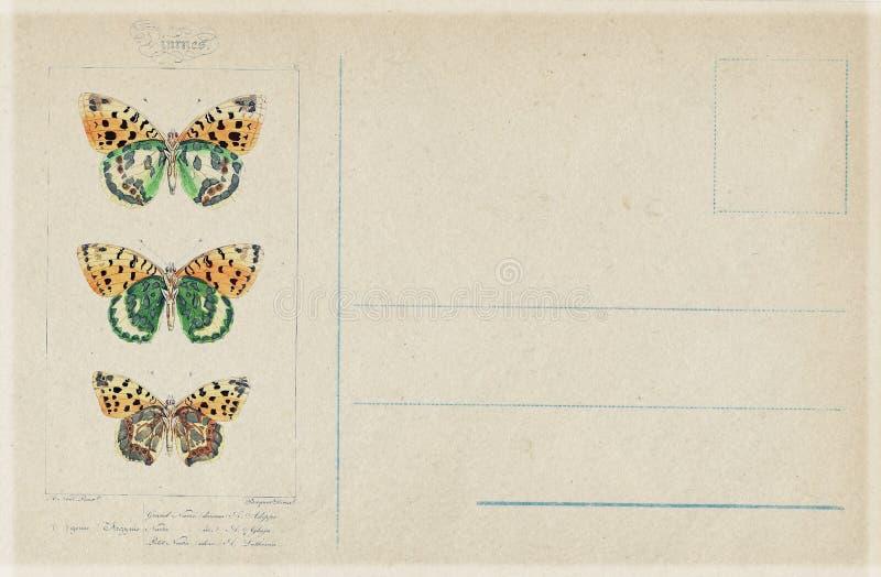 古色古香的葡萄酒样式植物的蝴蝶明信片 向量例证