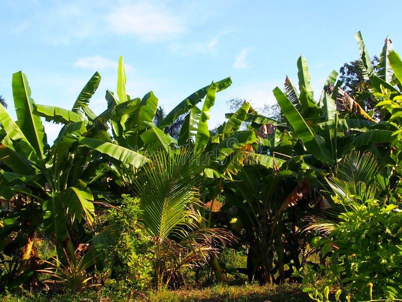 古巴的植被 免版税库存照片
