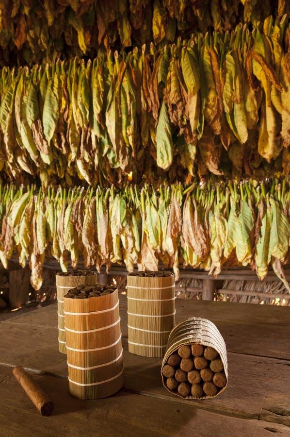 古巴雪茄在干燥房子里 图库摄影
