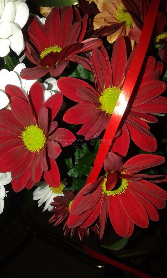 另一朵红色花 免版税图库摄影