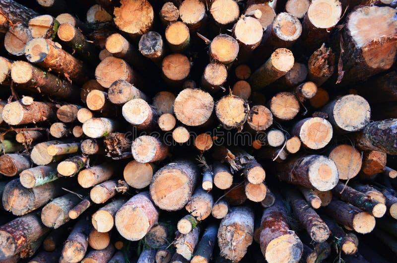 另外大小和被拍摄的特写镜头杉木日志从锯裁减的末端 库存图片