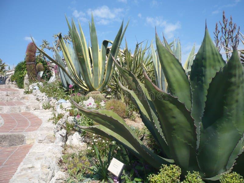 另外大小许多各种各样的仙人掌  仙人掌的耕种 库存照片