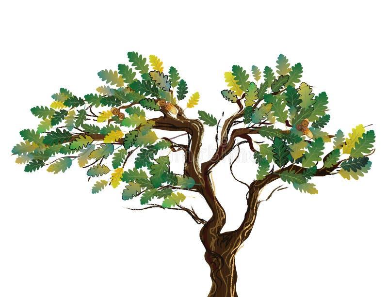 另外树山脉灰,槭树,与一个开放鸟笼的白杨木分支  皇族释放例证