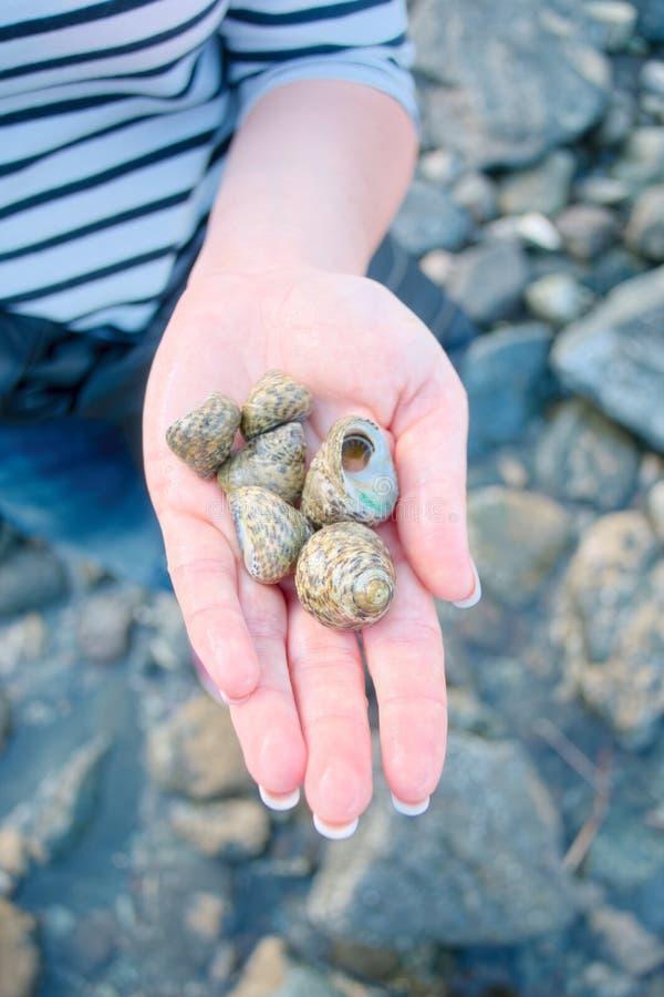 另外海扇壳在妇女手上 库存图片