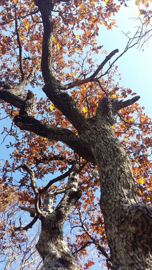Download 8另外的eps格式以图例解释者橡树 库存照片. 图片 包括有 结构树, browne, 季节, 外面, 自治权 - 82181428