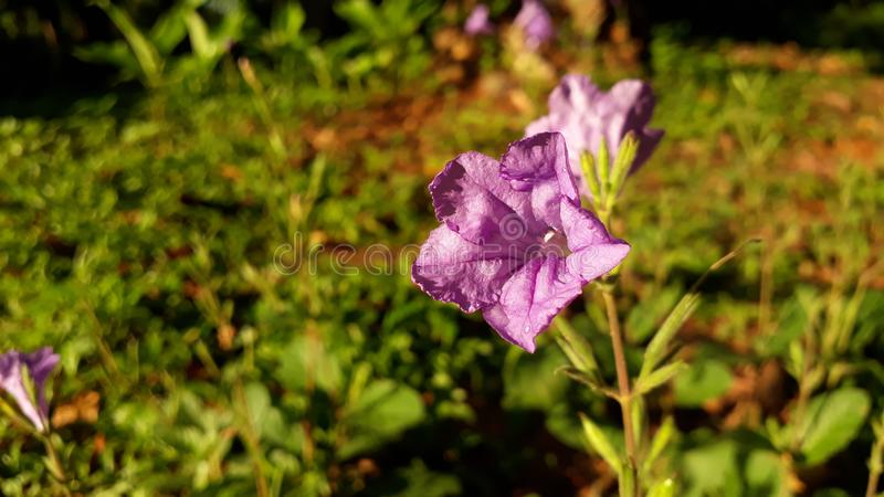 只有我认为这朵紫色花是逗人喜爱的? 库存照片