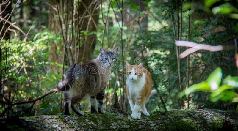 2只猫在森林里 免版税库存照片