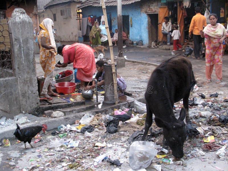 叫化子kolkata街道 在废料堆的动物 库存照片