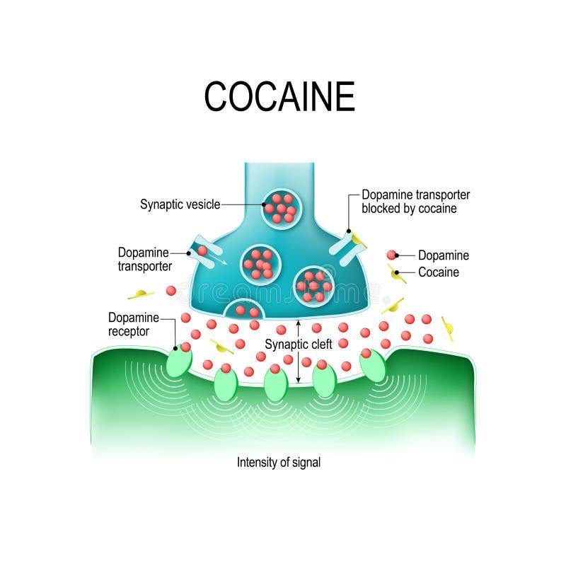 可卡因和多巴胺 皇族释放例证