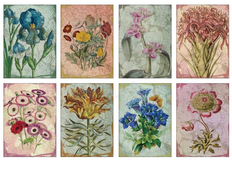 可印的标记板料-葡萄酒花卉例证艺术家收集的纸牌- ATC -可印的礼物标记 库存例证