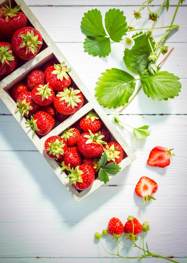 可口成熟红色草莓显示  免版税库存照片