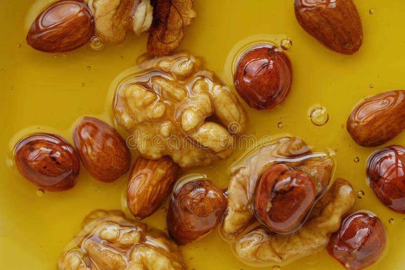 可口蜂蜜用核桃和榛子 库存图片