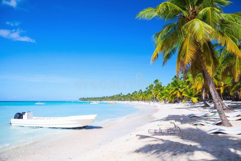 可可椰子和白色游船 库存照片