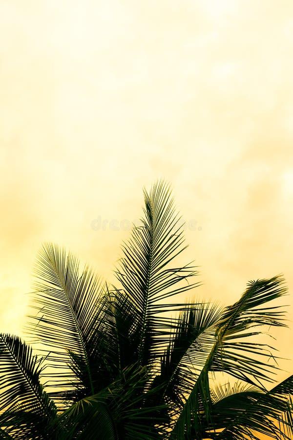 可可椰子在日落的树剪影 免版税库存照片