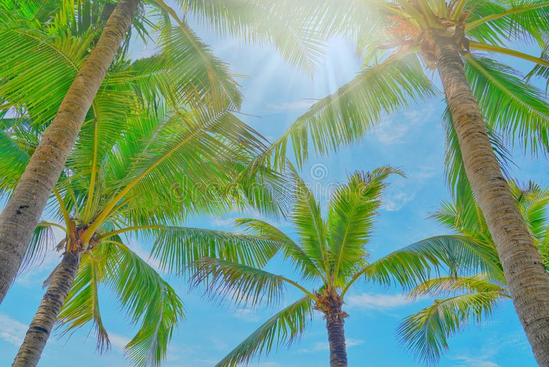 可可椰子树型视图和蓝天在海滩 免版税图库摄影