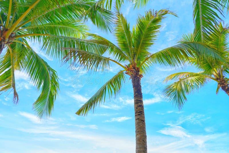 可可椰子树型视图和蓝天在海滩 库存图片