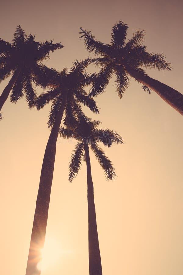 可可椰子树日落减速火箭剪影的葡萄酒 图库摄影
