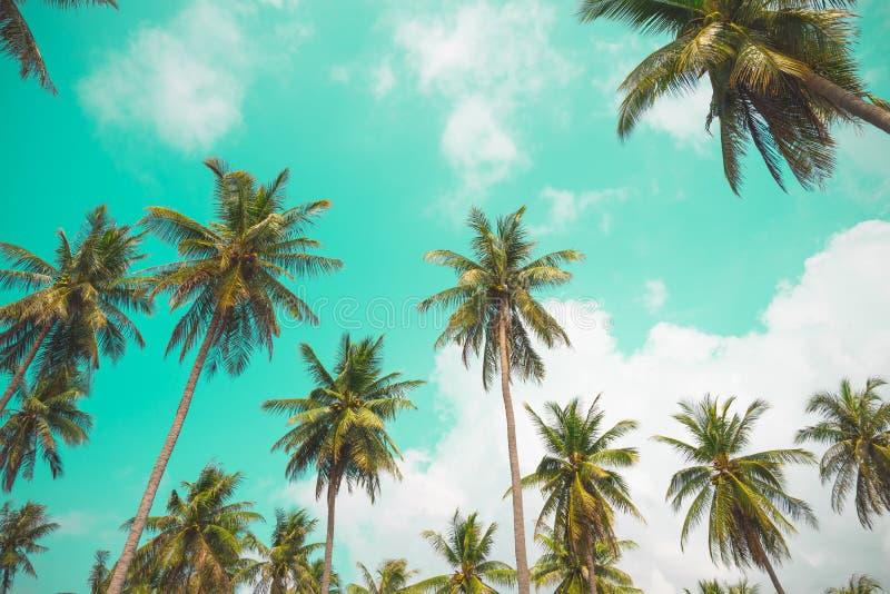 可可椰子树-热带夏天微风假日,葡萄酒吨 免版税图库摄影