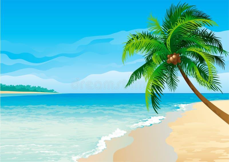 Download 可可椰子结构树 向量例证. 插画 包括有 蓝色, 海岸线, 海运, 户外, 没人, 本质, 田园诗, 海岸 - 22354859