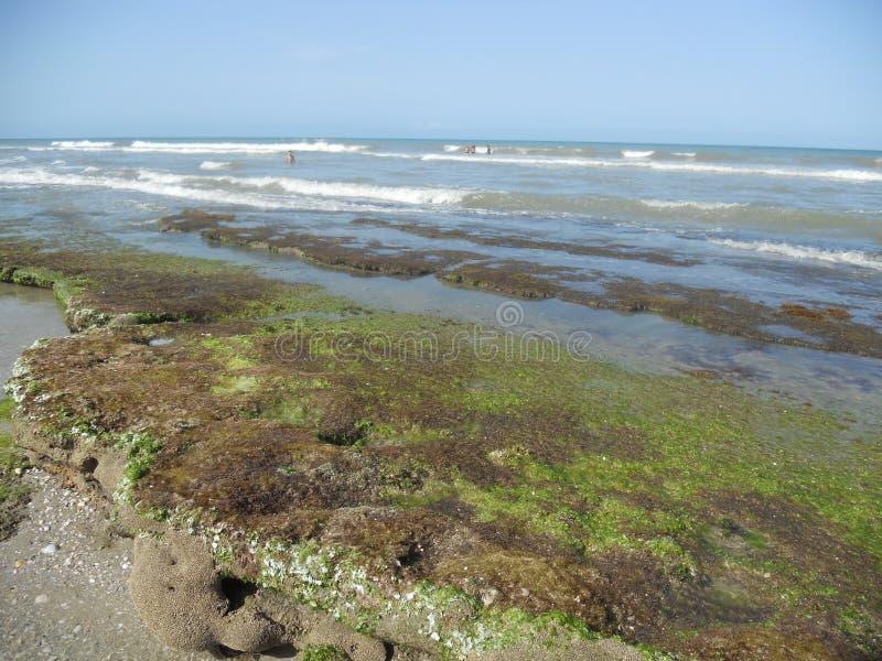可可粉海滩珊瑚礁 免版税图库摄影