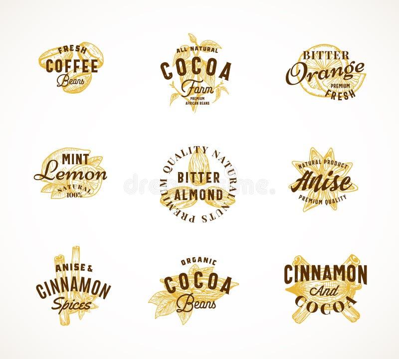 可可粉香料和咖啡被设置的抽象传染媒介标志、标志或者商标模板 手拉的豆和香料与保险费 库存例证