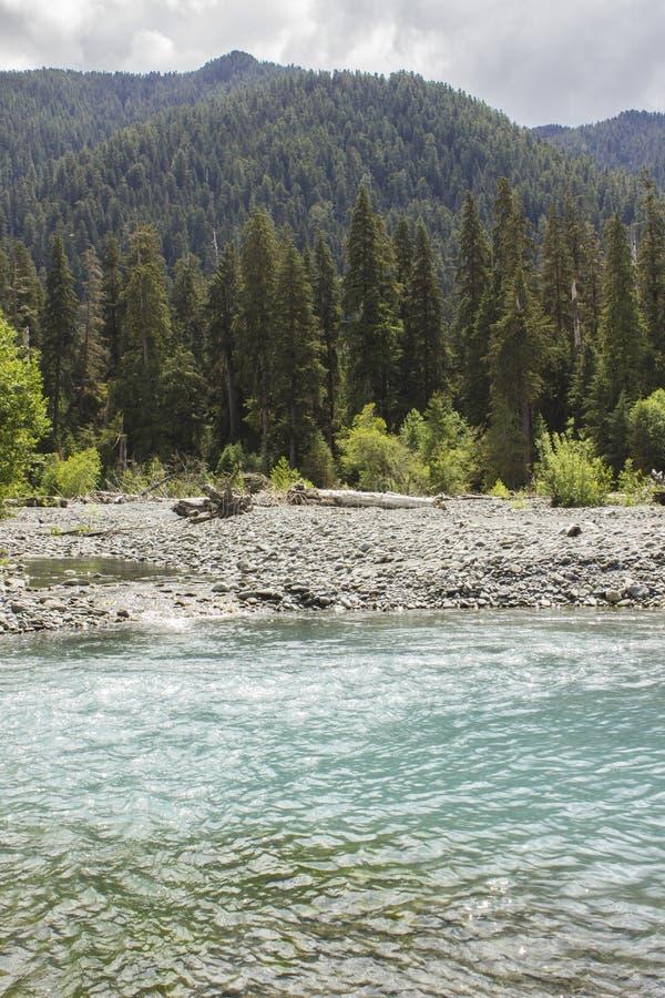 可可西里山河和雨林 免版税图库摄影