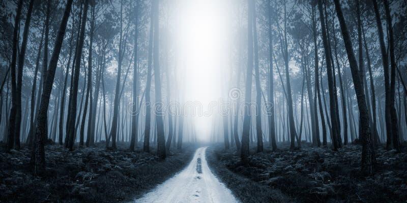 可怕有薄雾的路在森林里 库存照片