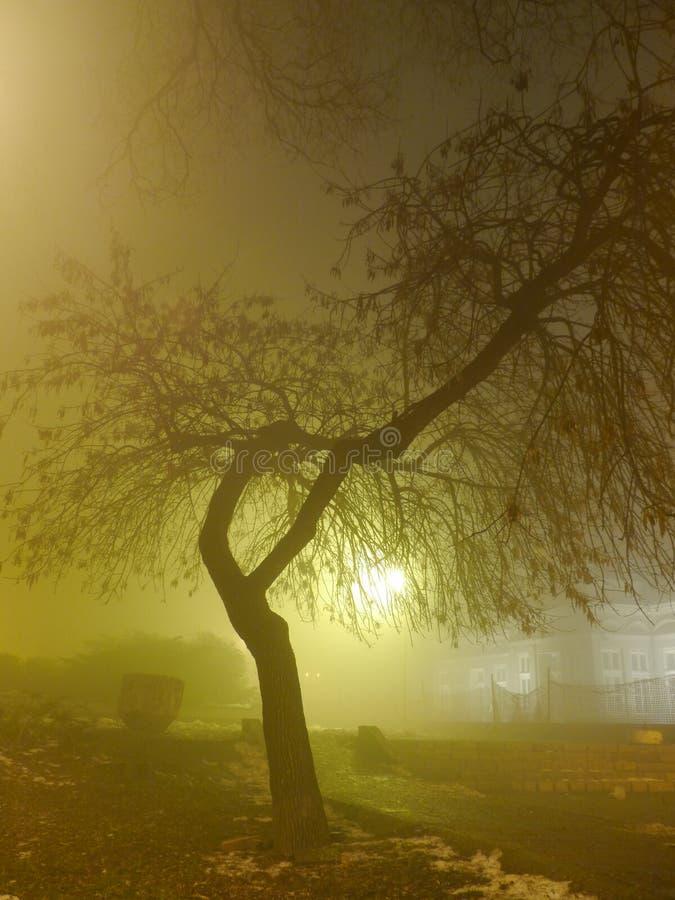可怕有雾的夜在城市公园 免版税图库摄影