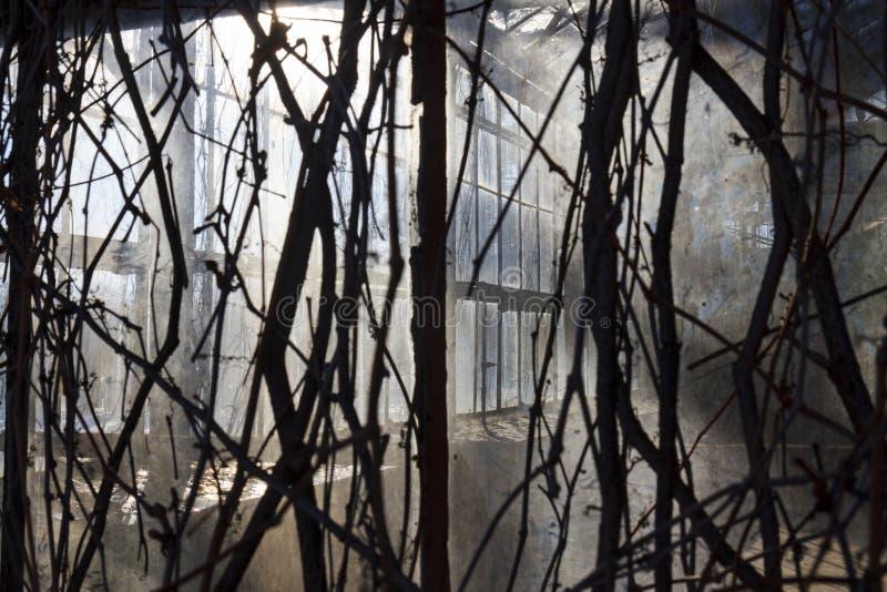 可怕的室wickered葡萄 免版税库存照片