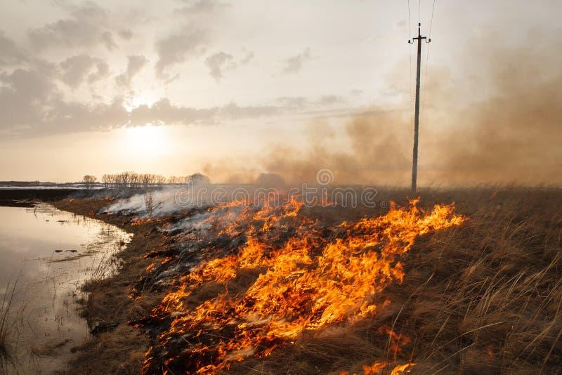 可怕的火毁坏领域 火焰烧春天草 安全措施和防止燃烧 免版税库存照片