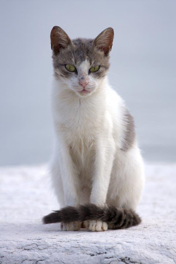 可怕的猫 免版税库存照片