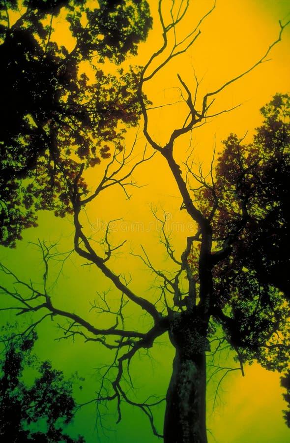 可怕结构树 库存图片