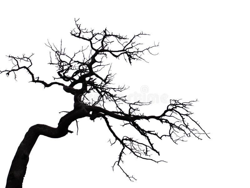 可怕结构树 免版税库存照片