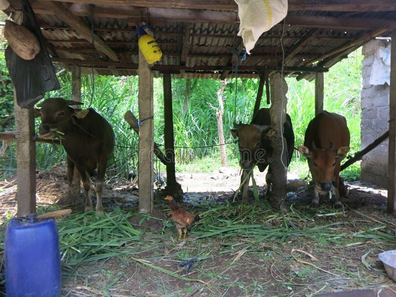 可怜的印度尼西亚人的生活方式和环境 库存照片