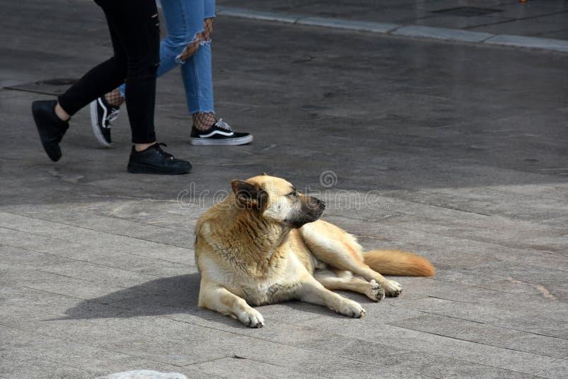 可怜的流浪狗在希腊 免版税图库摄影