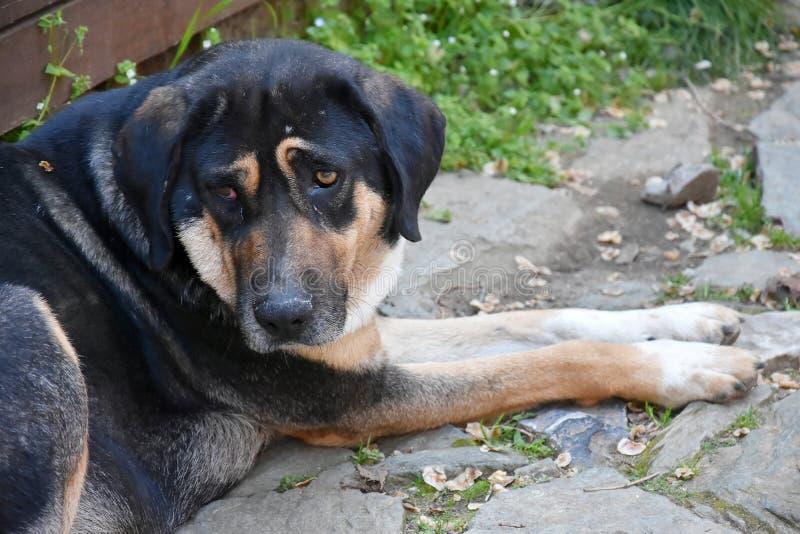可怜的流浪狗在希腊 免版税库存图片