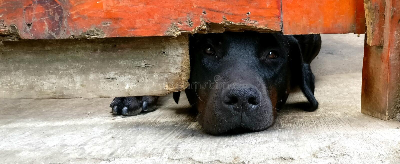 可怜的狗 库存图片