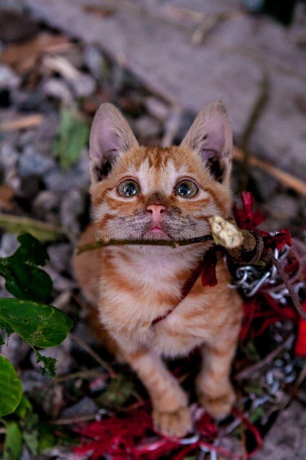 可怜的猫 免版税库存照片
