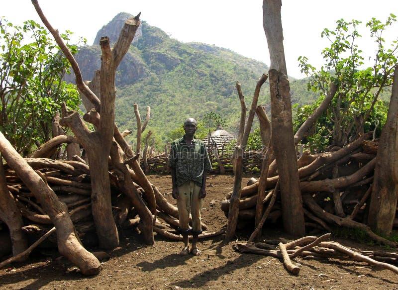 可怜的非洲村民前面家畜赶入围栏做削减树枝 免版税库存图片
