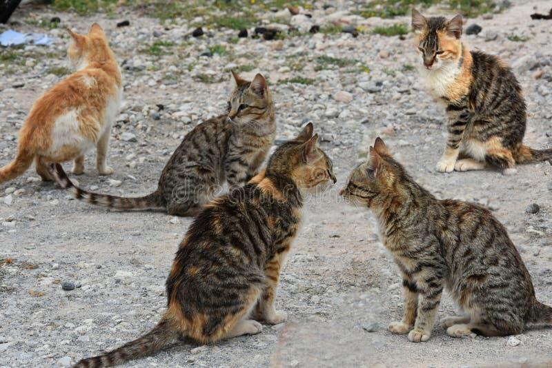 可怜的离群小猫 免版税库存照片
