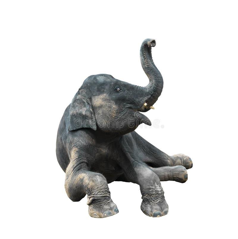 可爱宝贝大象坐地板并且握鼻子上面头 在白色的孤立 免版税库存照片