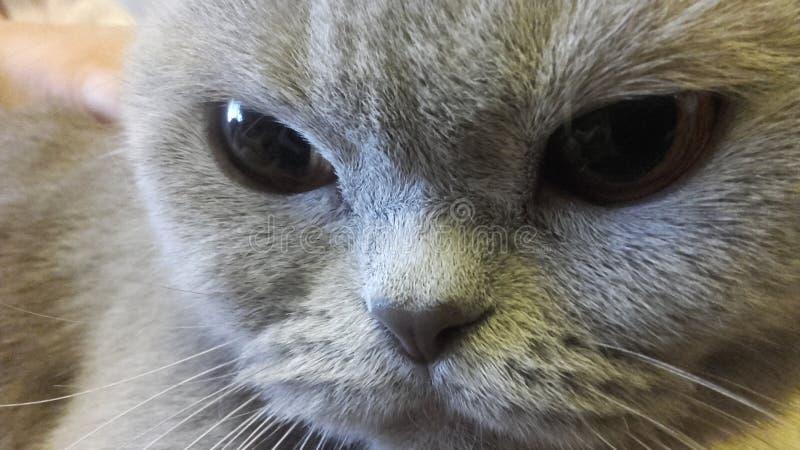可爱我的宠物 免版税库存图片