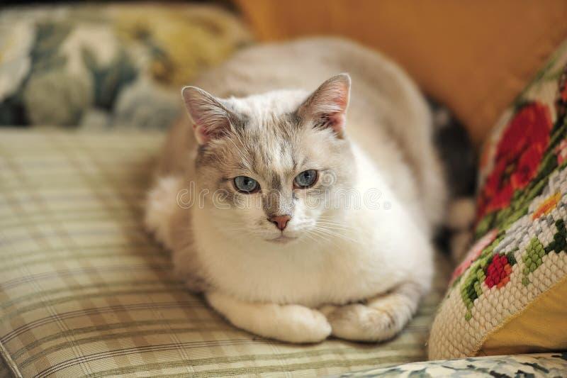 可爱的严肃的猫 免版税库存图片