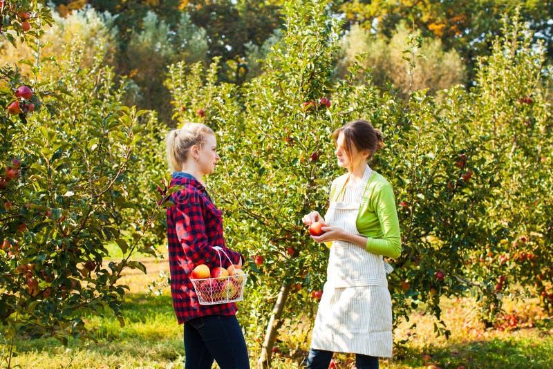 可爱的妇女在一个晴朗的苹果庭院里 库存照片