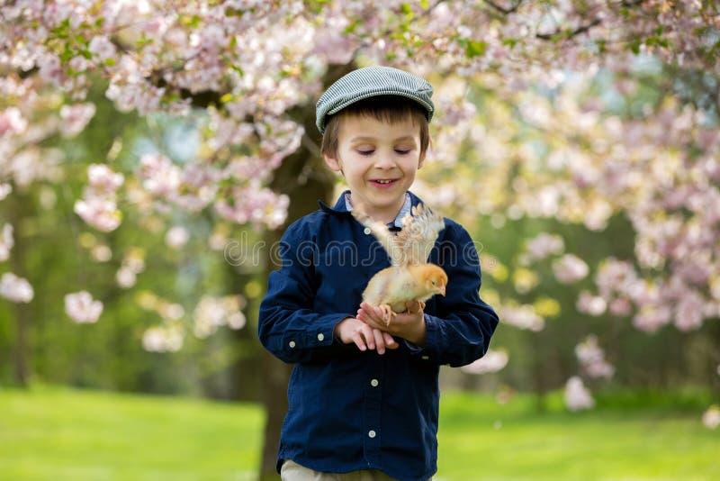 可爱的学龄前孩子,男孩,使用与小的小鸡 图库摄影