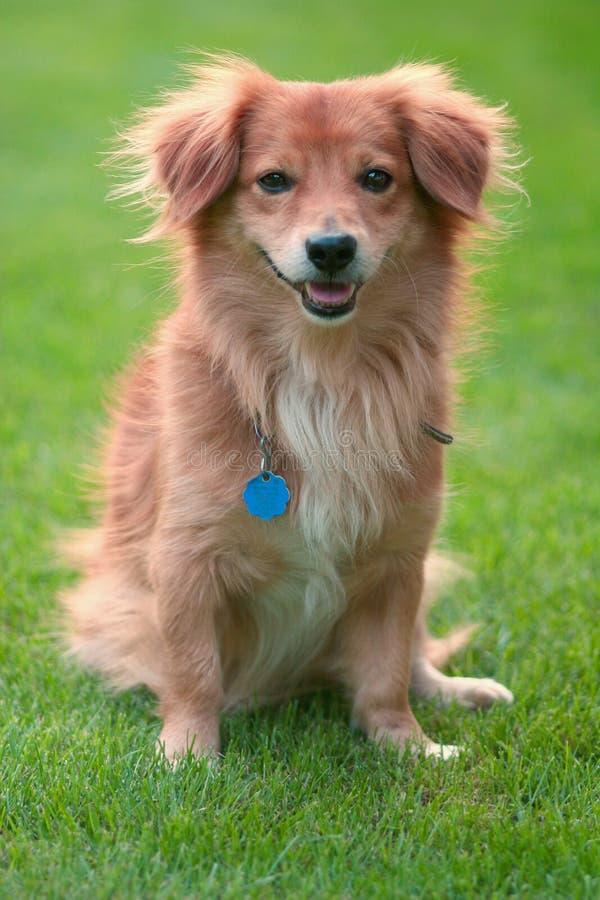 可爱的宠物 免版税图库摄影