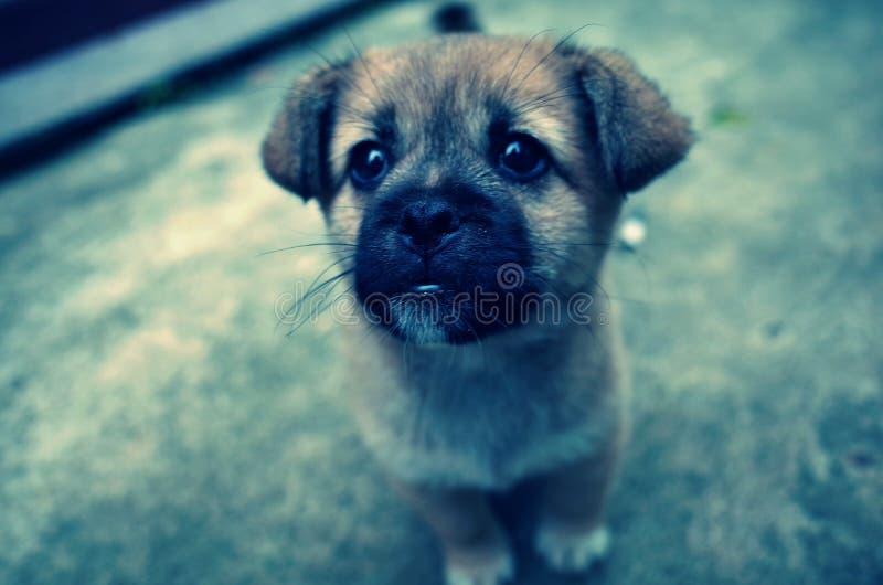 可爱的小犬座在仓前空地 免版税库存照片