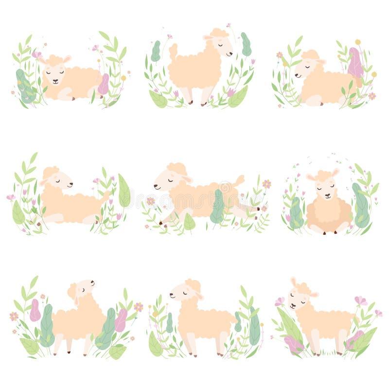 可爱的小的羊羔的汇集在美丽的春天草甸的,逗人喜爱的绵羊用不同的姿势导航例证 皇族释放例证